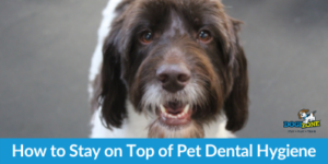 How to Stay on Top of Pet Dental Hygiene