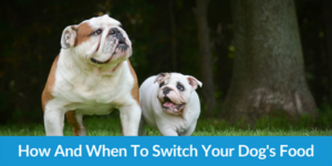 How And When To Switch Your Dog's Food